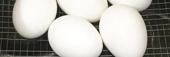 como-fazer-ovos-cozidos-na-airfryer
